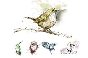 5 Ink Watercolor Birds
