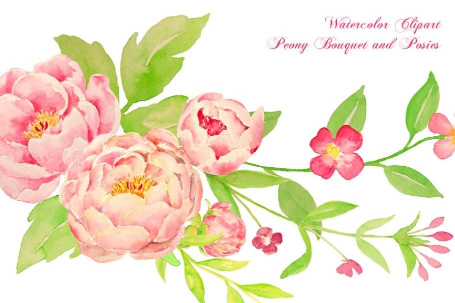 Watercolor peony. Bouquet posy illustrations creative