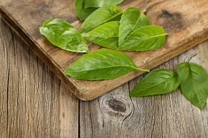 Fresh basil on wooden server