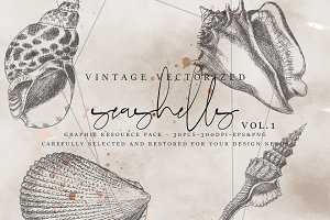 VintageVectorized-Seashells Clipart