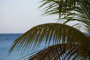 Palm with ocean