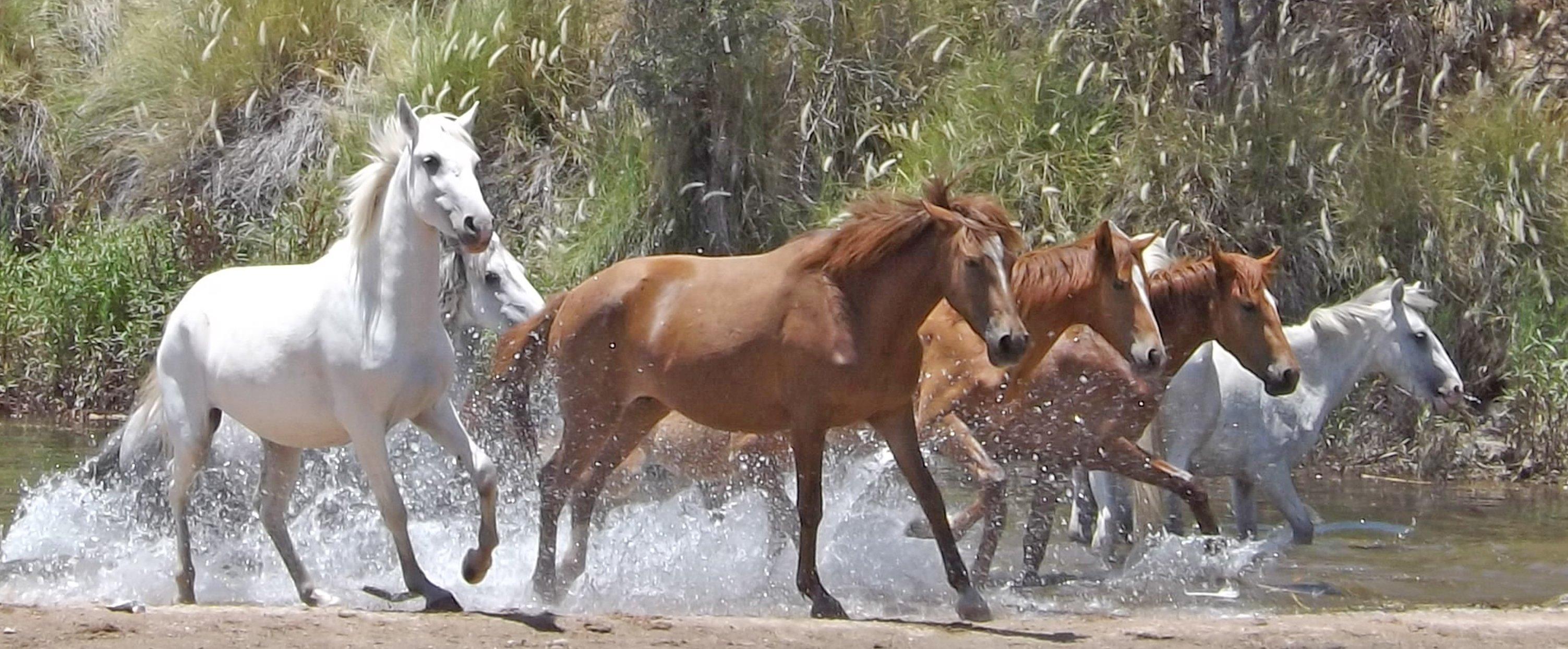 Horses Non Runners