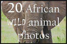 African wild animals   20 HD images