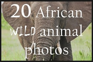 African wild animals | 20 HD images