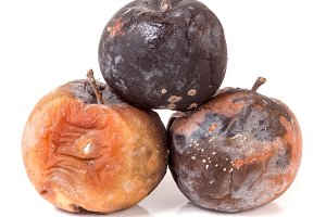 three rotten apple isolated on a