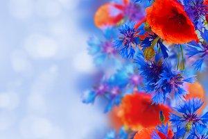 summer field flowers