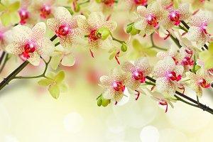 orchid  on defocused background