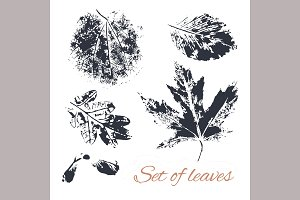 Leaves. Vector and raster.