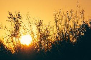 Sun branches
