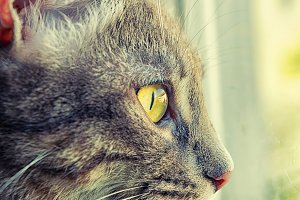 Tabby cat in profile