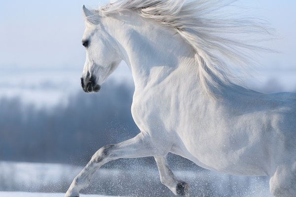 White Seven Horse, जानवर के चित्र - Shine India ... | 400x600