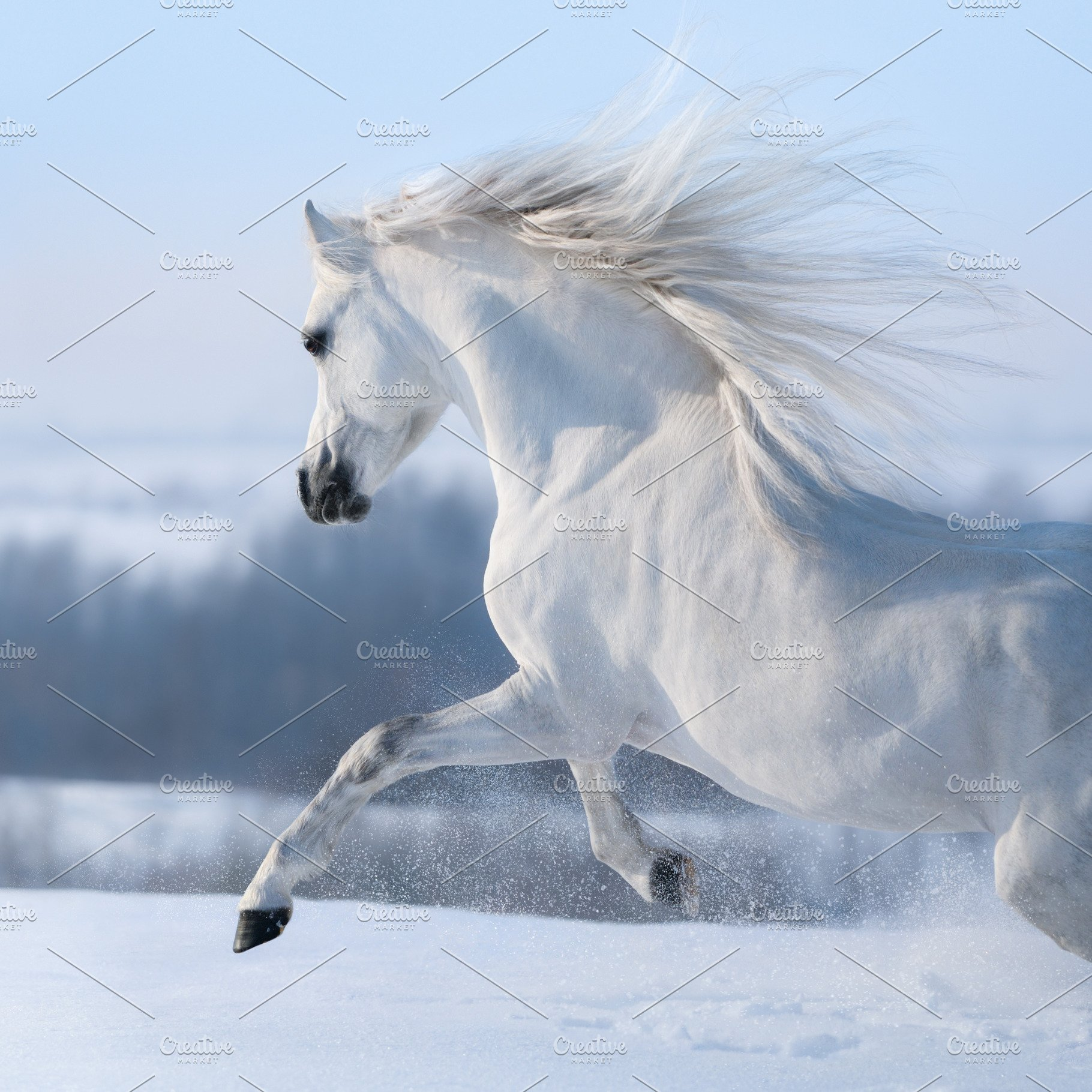 Beautiful white horse with long mane | High-Quality Stock Photos ...