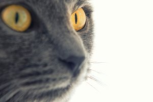 Cat yellow eyes