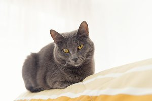 Gray cat relaxing on bed