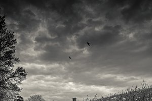 Swallows over the hill