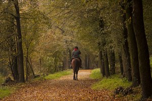 horseback ride in the wood