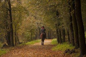 horseback ride in the wood