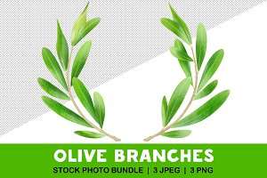 Two olive branches