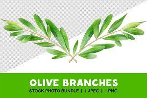 Two isolated olive branches