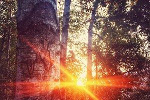 Catching last sunrays of sunset