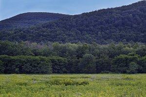 Lush Mountains