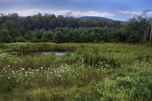 Vibrant Pond