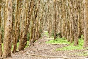 Lovers Lane in the Presidio