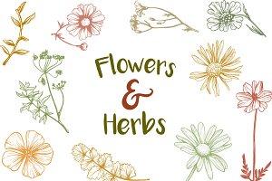 Vintage Flowers & Herbs
