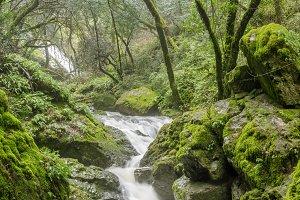 Cataract Falls in Mt Tam California