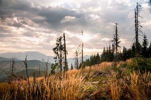 Landscape of dead woods on slope of