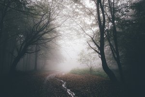 Haunted forest path with fog