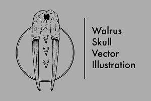 Walrus Skull Vector