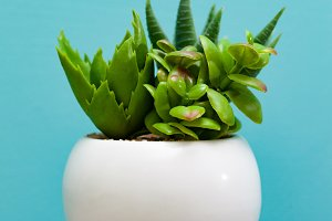 Green succulent plants in white flow