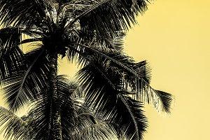 High palms on a tropical beach