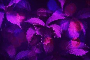 Purple toned foliage trendy