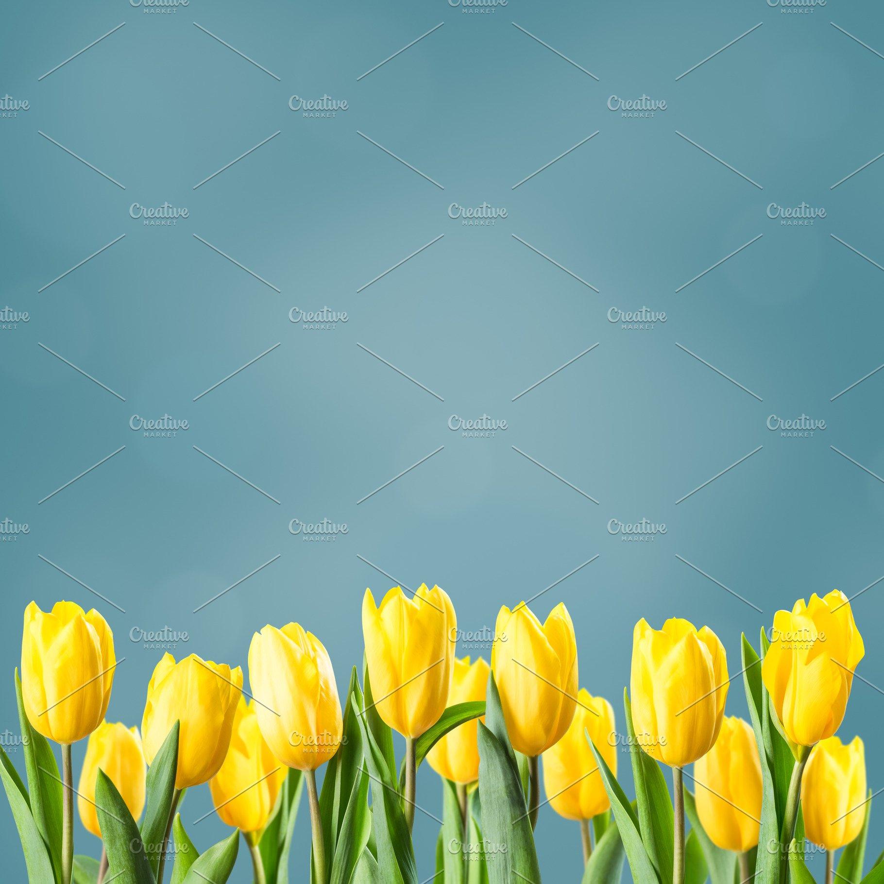 Sprind Floral Background For Design