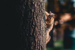 A squirrel on the side of the tree