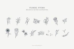 Floral Stems: Botanical Illustration