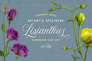Lisianthus Blooms Realistic Flowers