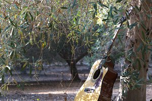 Acoustic guitar stands near the tree