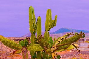 Canary island. Travel mood. Location