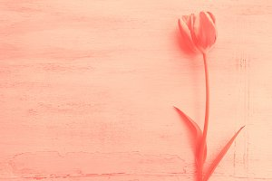 Spring easter tulip floral minimal