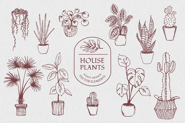 Illustrations - Hand drawn vector house plant set