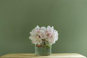 Pastel Pink Cut Flowers