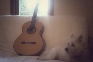 A dog and a guitar