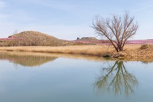 Landscape with Tree Reflection