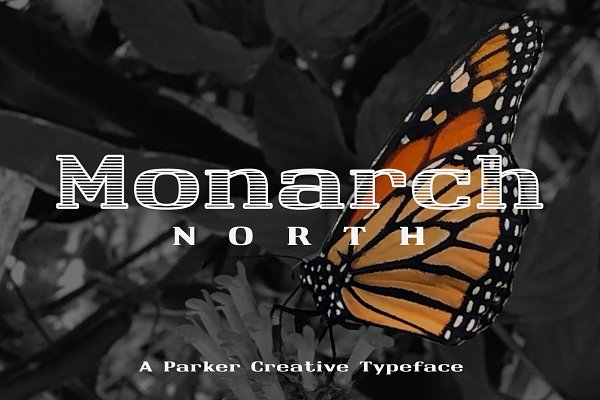 Best ★ Monarch North ★ Line Hatch Font Vector