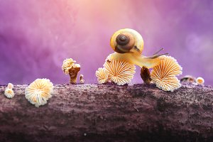 slug walks away from the mushroom