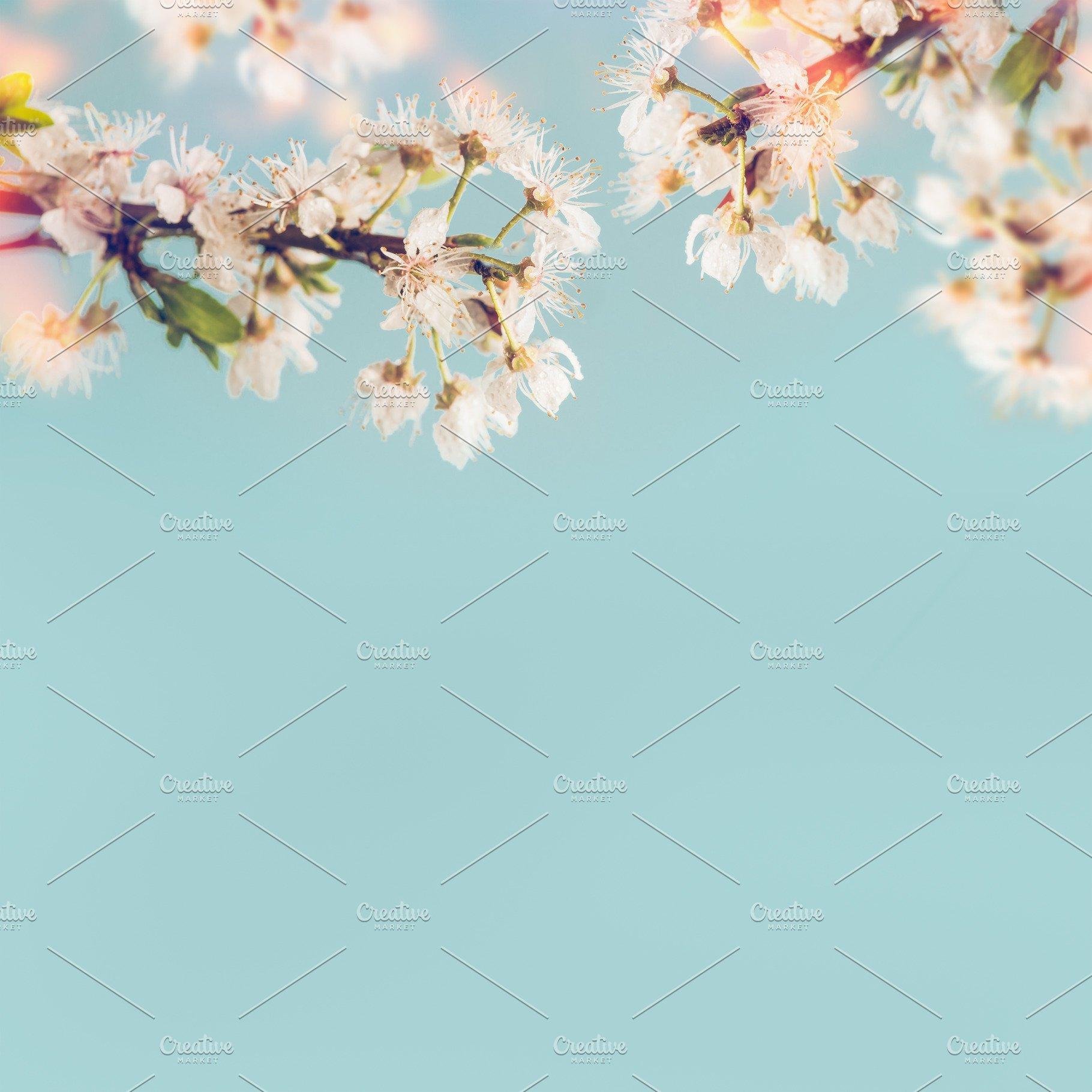 b0e73608e Sunny cherry blossom at blue ~ Nature Photos ~ Creative Market