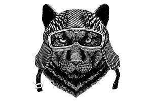 Animal wearing motorycle helmet